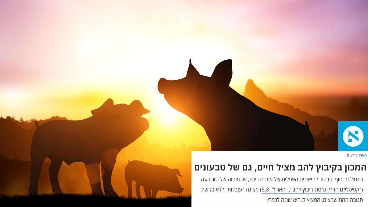 קיבוץ להב חזירים - הארץ